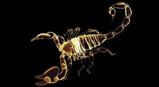 Особенности мужчин-Скорпионов