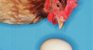 Как увеличить яйценоскость кур