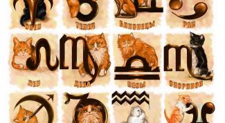 Каким знакам Зодиака подходят кошки