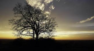 How to determine your tree horoscope
