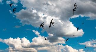 Какие птицы прилетают с юга раньше всех