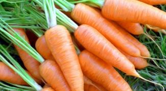 Какие бывают сорта моркови