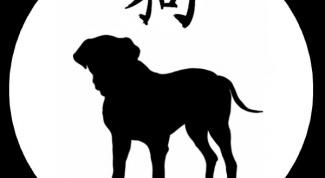 Каким годом будет год Собаки