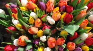 Все о тюльпанах: выбор сортов