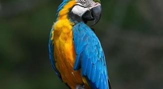 Какого попугая лучше всего купить