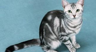 Как ухаживать за котом после кастрации
