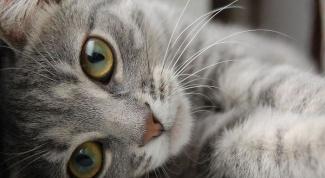 В какие игры играть с котом