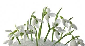 Какие изменения происходят в природе в марте