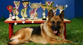 Какие должны быть документы у собаки