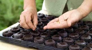 Как сажать семена растений в таблетки
