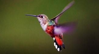 Какие птицы самые маленькие на планете