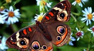Как привлечь в сад бабочек: оформление пестрой клумбы