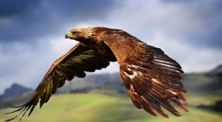 Какие птицы самые опасные
