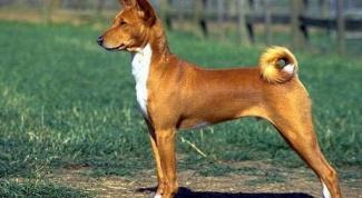Какие породы собак относятся к компаньонам