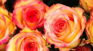 Какого цвета розы подарить теще