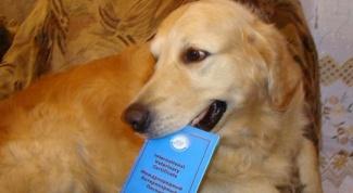 Какие прививки надо делать собаке ежегодно