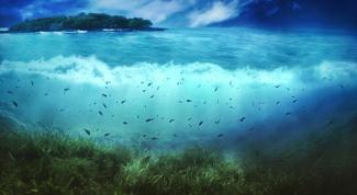 Какие рыбы водятся в Белом море