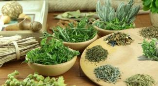 Какие растения используют в медицине