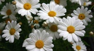 Какие цветы можно подарить подруге на 15 лет
