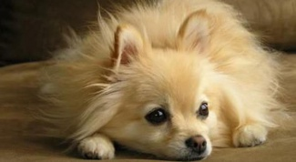 Какие признаки лишая у собак
