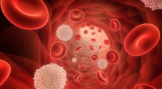 Какова норма лимфоцитов в крови