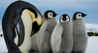 What animals live at the South pole