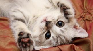Какие кошки снимаются в рекламе