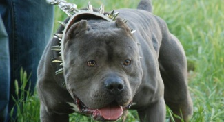Какая самая злая порода собак