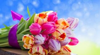 Какие тюльпаны подарить девушке
