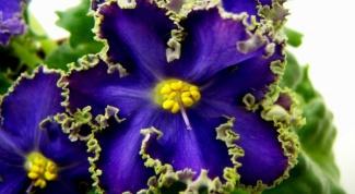 Каким цветам не нужен солнечный свет