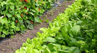 Какие овощи можно сажать рядом