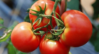 We grow tomatoes in open ground by the rules