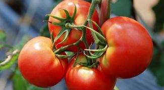 Выращиваем томаты в открытом грунте по правилам