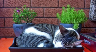 Как приучить котенка быть послушным