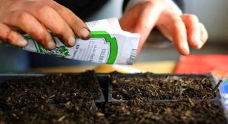 Какие семена надо сажать в марте