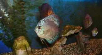 Почему в аквариуме зацветает вода