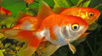 Как ухаживать за рыбами в аквариуме