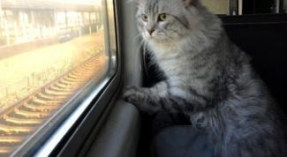 Какие нужны документы для перевозки кошек в поезде