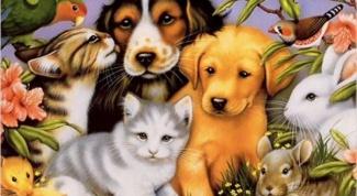 Какие нужны документы на породистое животное