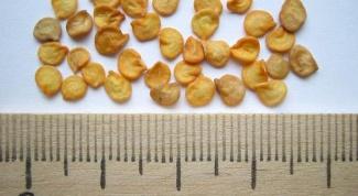 Какие семена перца выбирать на рассаду