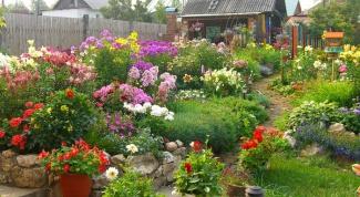 Что делать цветоводу в июле