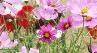 Какие цветы посадить в мае