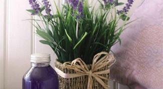 Как вырастить лаванду в домашних условиях
