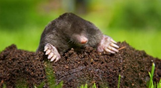 Struggling with moles on the site