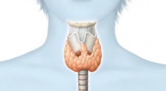 Какие органы вырабатывают гормоны