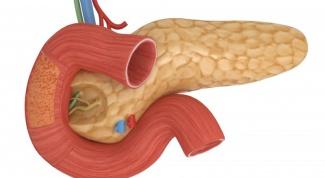 Какой орган вырабатывает инсулин