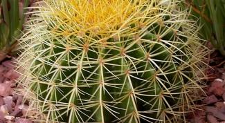 Какая нужна земля для кактусов