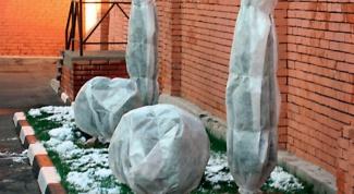 Как защитить дачные растения от морозов