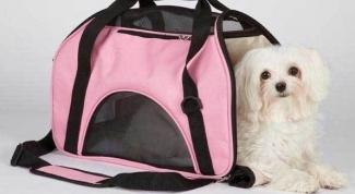 Как выбрать переноску для собак