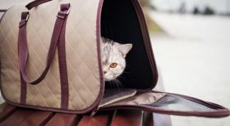 Как выбрать переноску для кошек